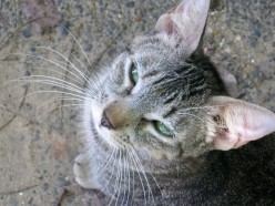 Save A Gato (Cat)