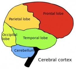 Four lobes