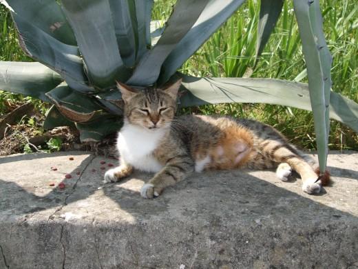 Cavtat Cat