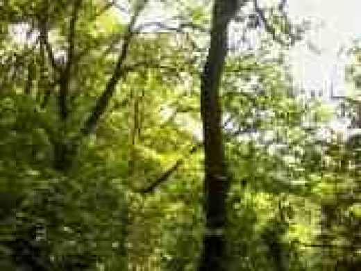 Trees also feature frequently in readings