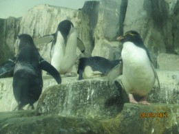 More Penguins at the Zoo