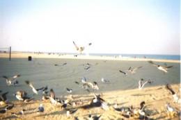 Birds at Ocean City, MD