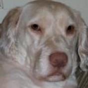Corwinblade profile image