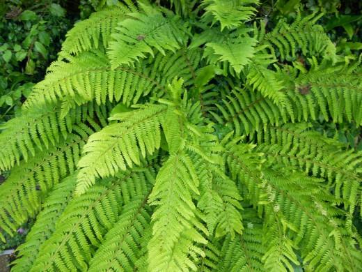 Leafy green ferns in the rain