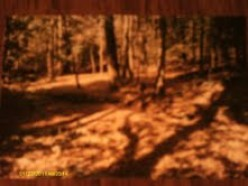 Uwharrie National Forest- History and Paranormal  Mysteries