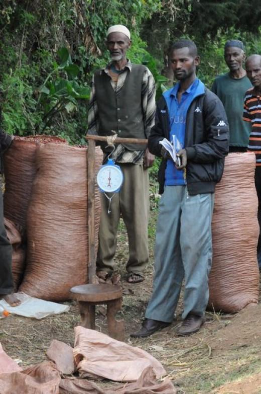ethiopian coffee farmers
