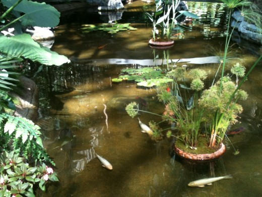 Who wouldn't find a koi pond relaxing?
