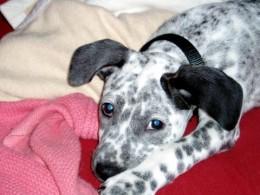Iris, An Adoption Success Story
