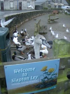 Feeding the ducks at Slapton Ley.