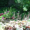 Perennials: Early Summer Bloomers and some non-flowering
