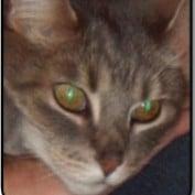 Mesmer7 profile image