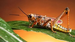 Facts about a grasshopper life cycle, one of amazing insect that are living around us