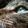Maemers profile image