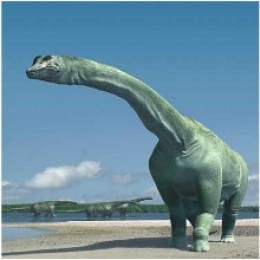 Plant eater argentinosaurus (named after Argentina, where its remains were found.