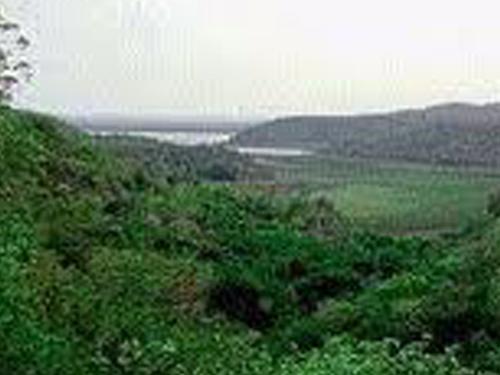 Konchavaram forest