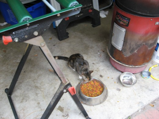 another feral cat