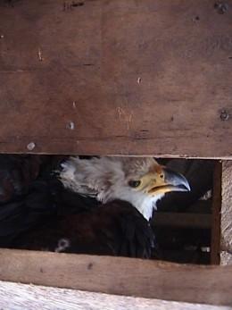 Reported to Uganda Wildlife Authority