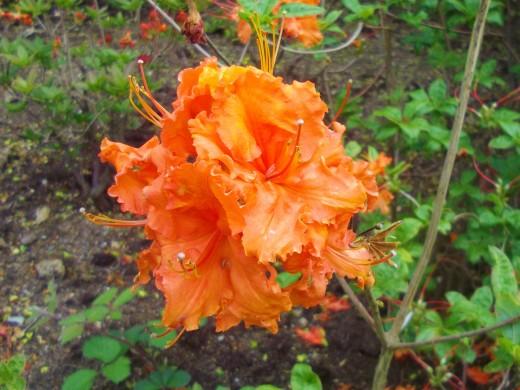 Bright orange flower.