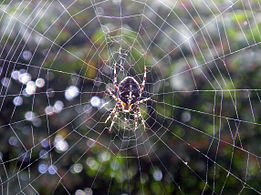Spider in web!