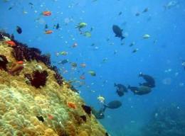 Snorkel delight