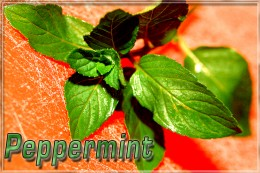 Peppermint goes fantastic with chocolate!