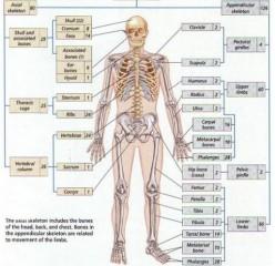 Yoga for Bones