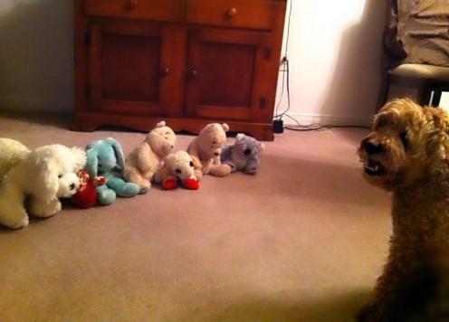 Simba's favourite stuffed toys.