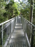 Things to Do in Australia - a Visit to the Otway Fly Treetop Walk