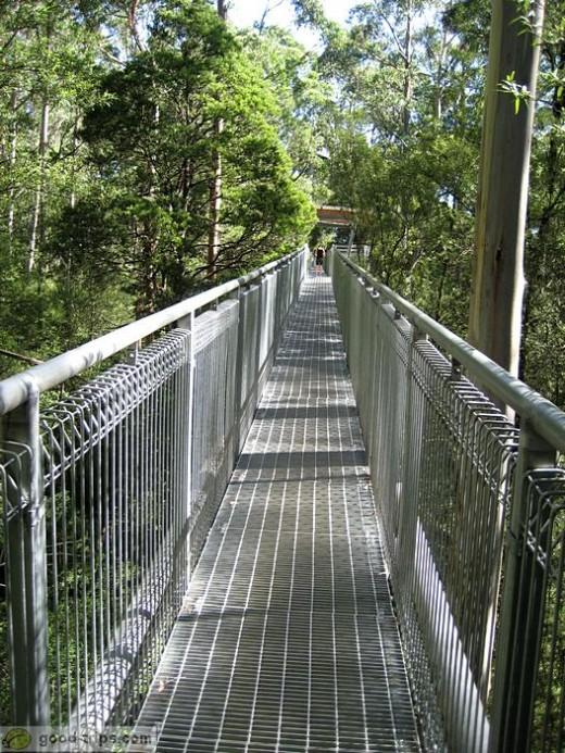 The Otway Treetop Walk