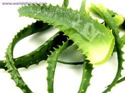 4 Benefits of Using Aloe Vera Juice