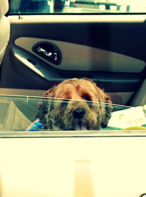 Love and care for your pet by not exposing them to excess heat outdoors.  If you feel hot, the more they do. No wonder, a dog would stick his head out of the car window.