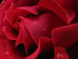 Tears of Joy from Limbo Poet Source: flickr.com