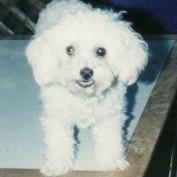 BuffyGirl profile image