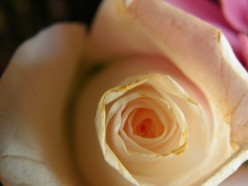 """A rose has connotative meaning that runs deep back into the history of human culture.  This is the power of """"Logical Analogy."""""""