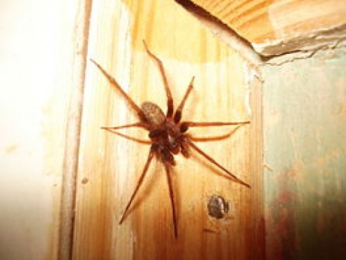 Spiders around your house