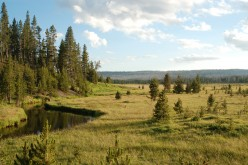 A Hike Down Firehole Meadows Trail in Yellowstone National Park