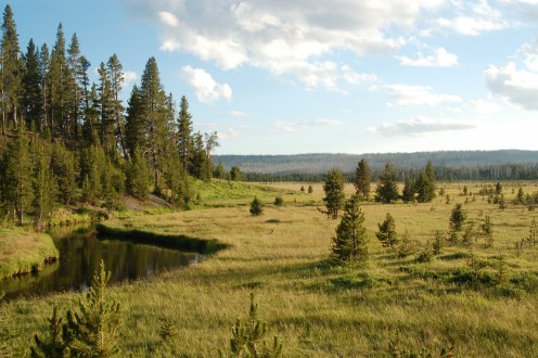 Fire Meadow, Yellowstone National Park