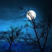 moonfairy profile image