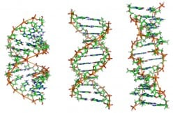 The History of DNA Forensics