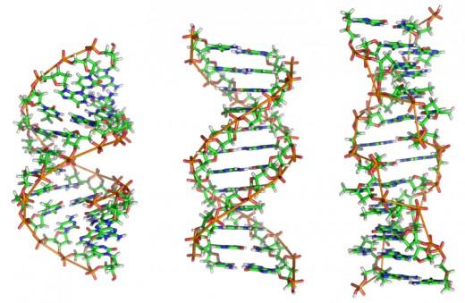 DNA Helix Structures