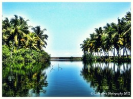 The beauty of the coconut groves and mangroves along the river