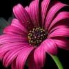 toshimi profile image