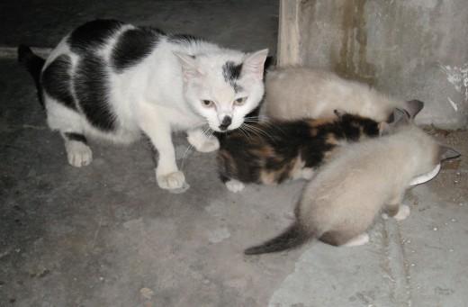 Mamacita guarding her three precious kittens - one didn't make it!