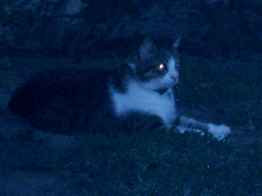 Mr. Hobbes takes some night-time R&R outdoors.