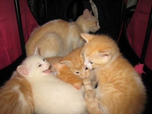 Kittens explore their environment
