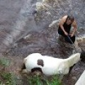 our little river normally occupied by ducks is a great place to wash the horses.