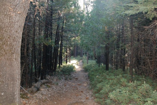 trail between Mariposa Grove and Wawona