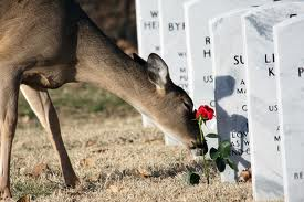 Even our cemetary is not safe.