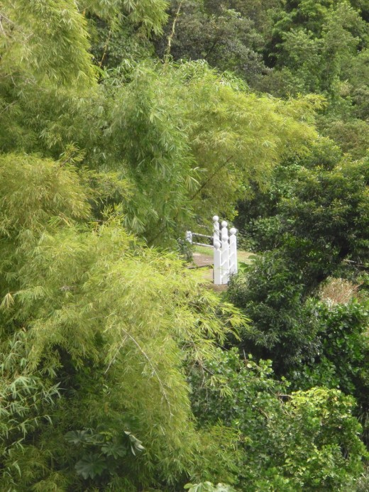 Viewing platform in bamboo forest above the Soufriere volcano in Saint Lucia.