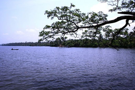 Cherai backwaters